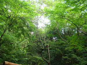 2008.08-4.JPG